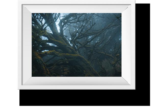 Oak-frame