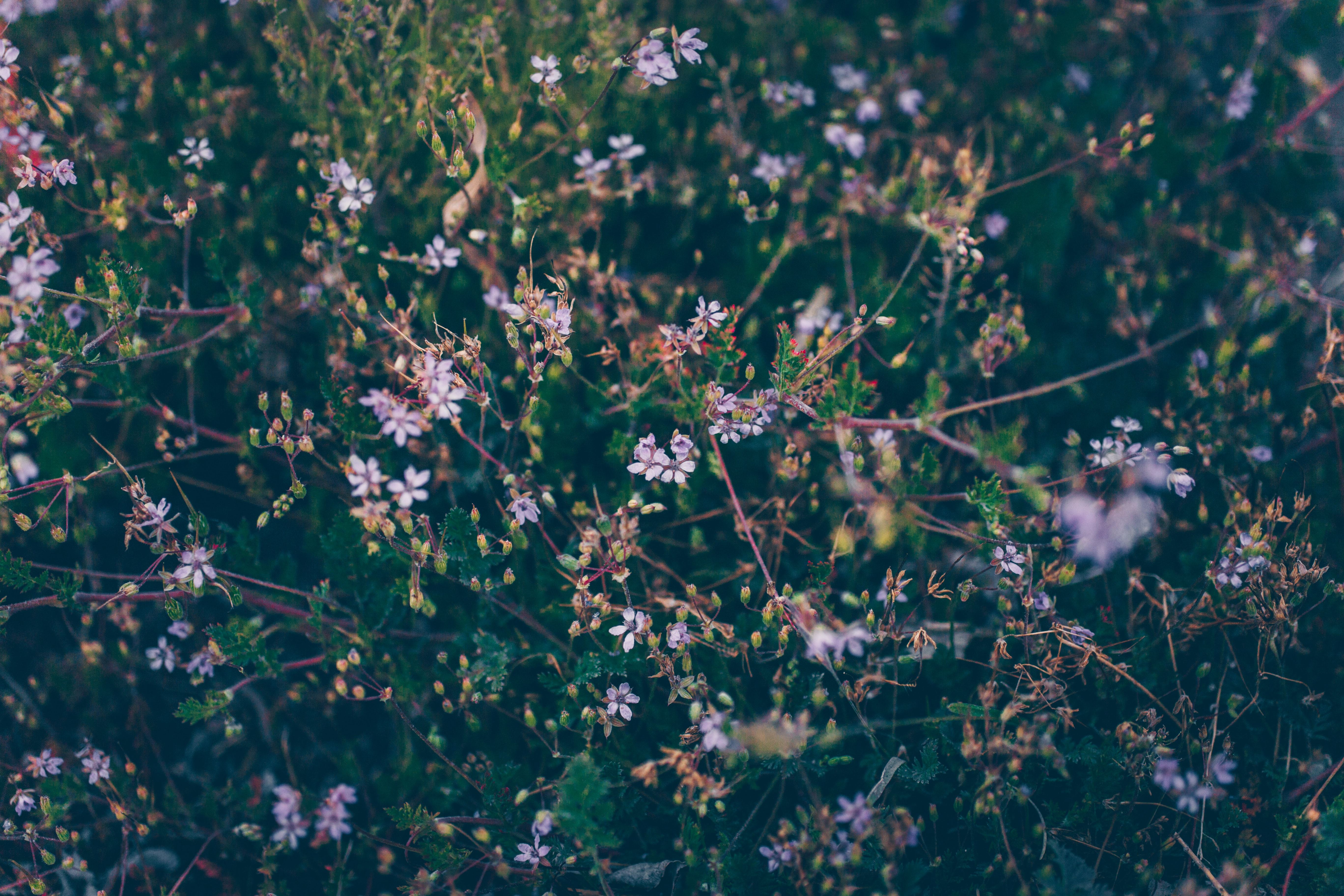 How to rewild your garden: starting small