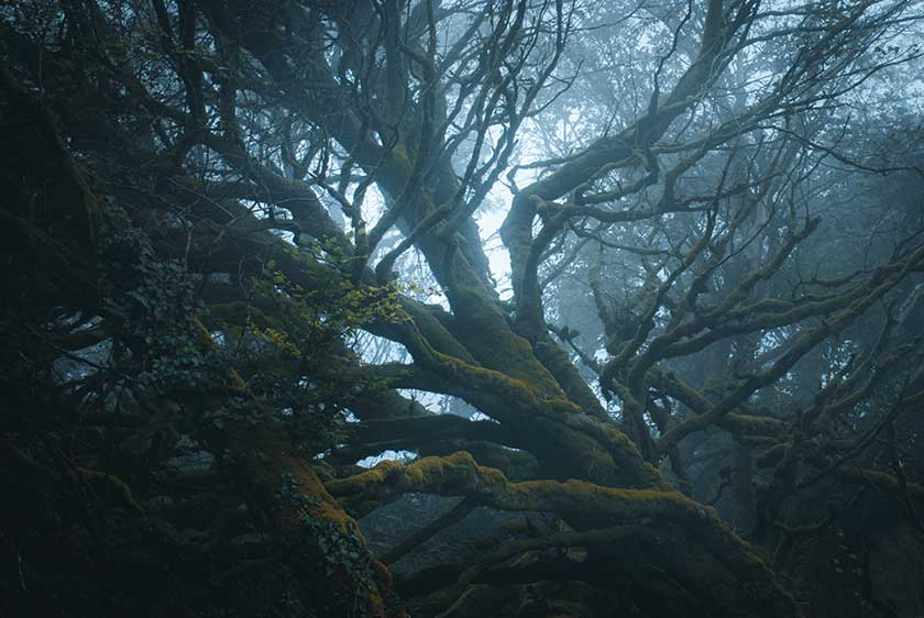 Native Irish Trees: the definitive guide